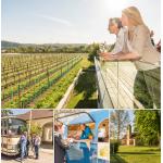 Tour de Vin – Hop-On / Hop-Off Weintour um 49 € statt 64,90 €