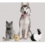 Amazon Pets Store – 5 € Gutschein bei Profilerstellung