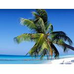 nur heute buchbar: Wien – Honolulu (Hawaii) um 767€ mit Air France