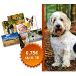 Austrobild – Poster für 0,75 – verlängert