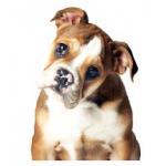 Cyber Monday Countdown Angebote am 22. November 2013: Highlights für den Hund stark reduziert
