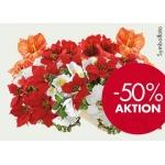 bellaflora: -50% auf Seidenblumen, Kunstpflanzen, Bänder…